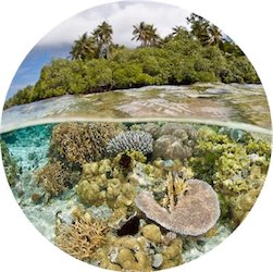 coral400circ
