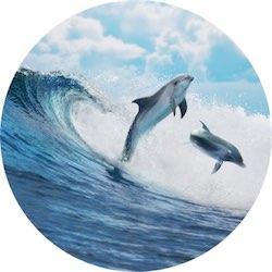dolphin400circ2