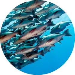 fish400circ